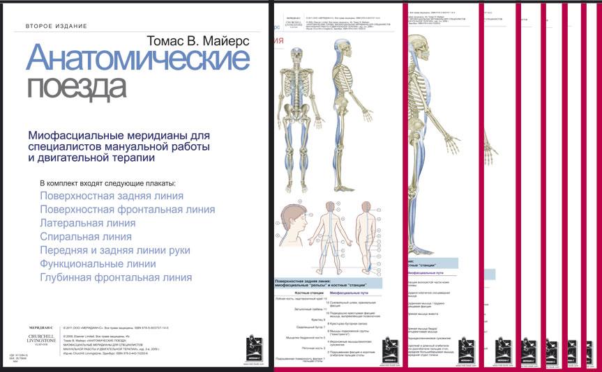 Томас В. Майерс. Плакаты Анатомические поезда: Миофасциальные меридианы для специалистов мануальной работы и двигательной терапии, Набор плакатов